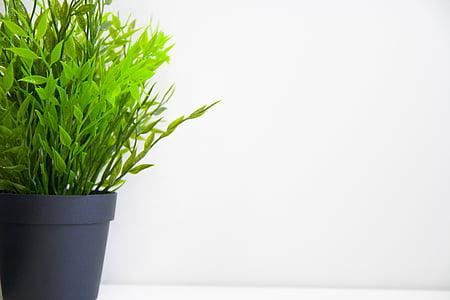 flor, planta, verde, fechar, plano de fundo, espaço de cópia, planta em vaso