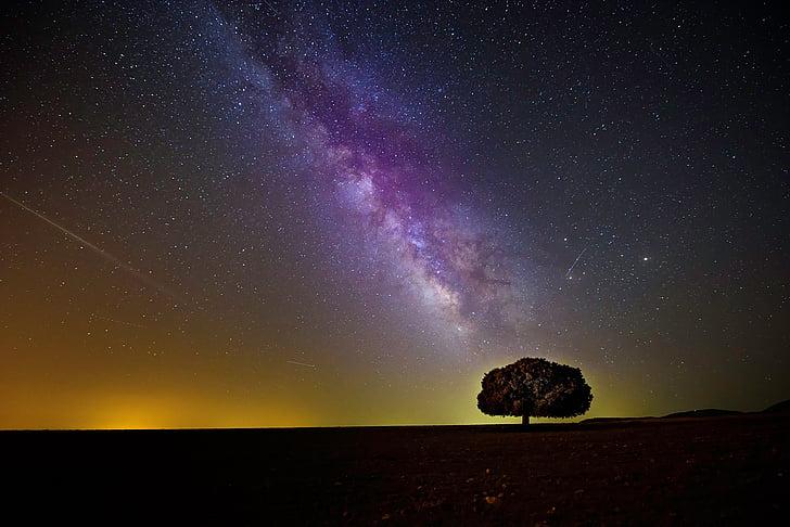 silhueta, árvore, Starfield, escuro, à noite, céu, estrelas