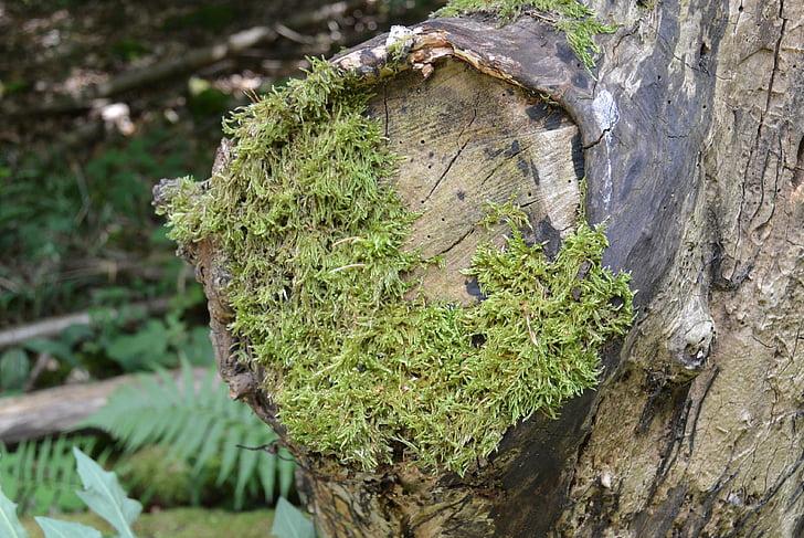 Moss, skog, treet, gren, grønn, eventyr skog