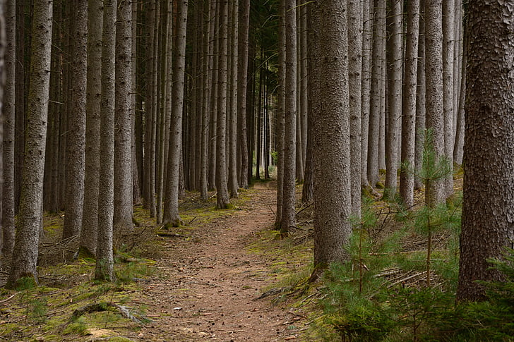 recovery, away, path, forest, nature, migratory path, hiking