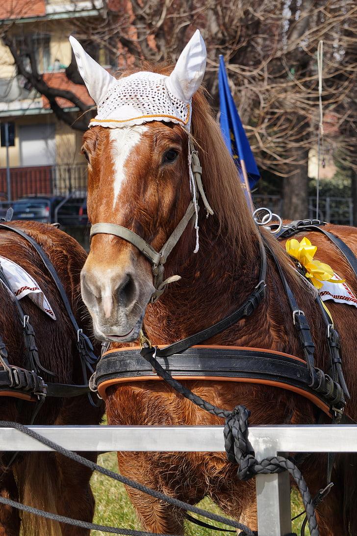 paard, Iperion Beach, bruin, oorkappen, boog, geel, harnas