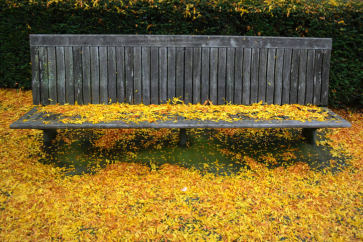 tardor, temporada, fulles, colors, natura, fulles de tardor, Banc