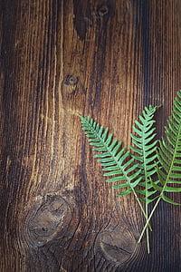 Fern, groen, plant, hout, donker, sonnenverbrannt, sluiten