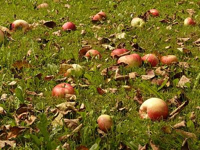 яблоко, Луг, урожай, выбрать, непредвиденной, фруктовый сад, фрукты