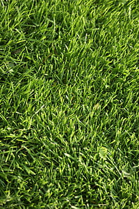 tráva, trávnik, Zelená, Príroda, Záhrada, Domov, jar