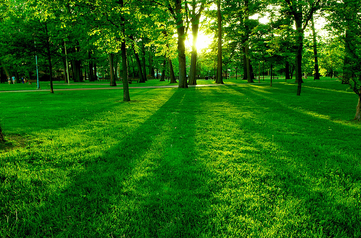 green, nature, trees