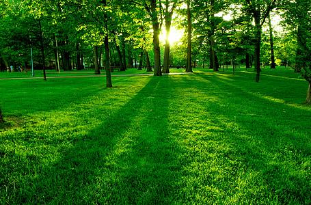 žalia, Gamta, medžiai