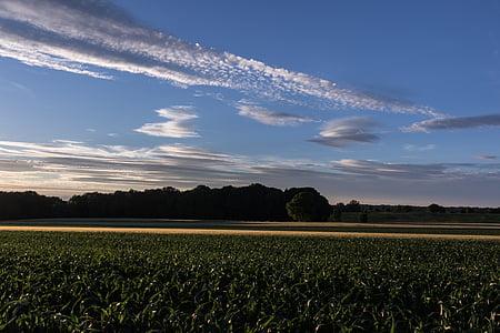 niebo, chmury, chmury formularza, wieczorne niebo, krajobraz, pole, kukurydza