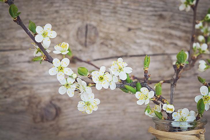 cirerer, blanc, flors, flors blanques, branques, branques de flor de cirerer, Gerro
