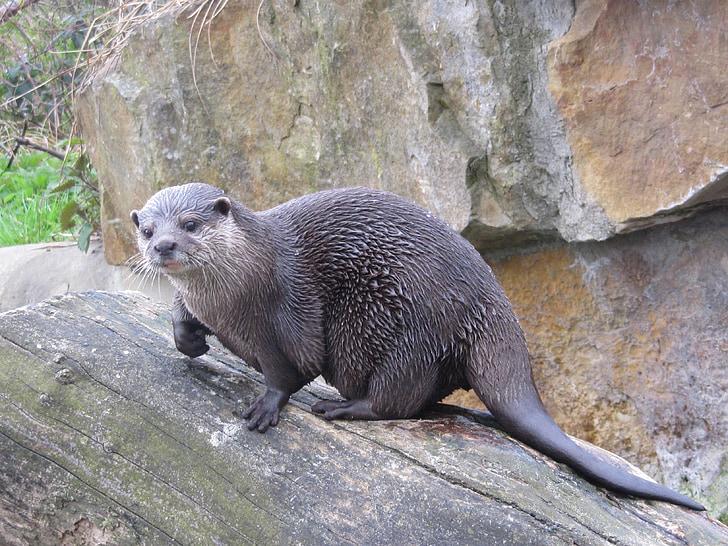 otter, wet, fur, zoo
