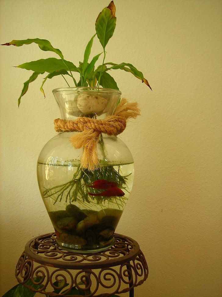 betta fish, fish, betta, aquatic, tropical, red, water