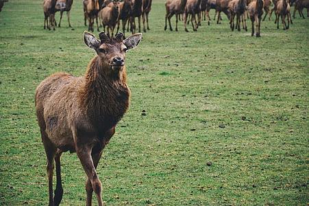 hươu, sở thú, động vật, hoang dã, Thiên nhiên, sở thú động vật, động vật hoang dã