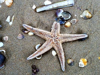 estrella de mar, platja, closca, bombardejos, sorra, Mar, natura
