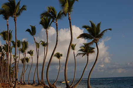 punta cana, caribbean, palms, hotel, nature, beach, pool