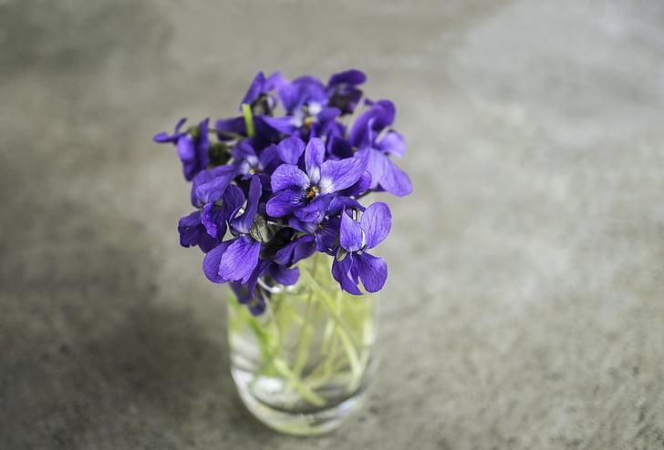 violetes, violeta, flor, primavera, macro, natura, jardí