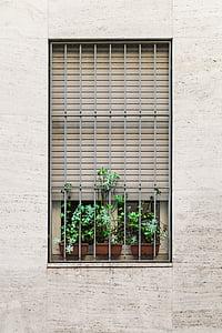 symmetry, aesthetics, windows, grills, plants, garden, pot