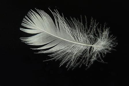 надолу, Пролет, лек, лети, леко, плувка, птичи пера