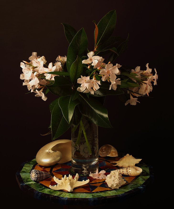Oleander, virág, Csendélet