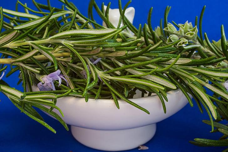 δενδρολίβανο, αρτυματικά φυτά, βότανα, Rosmarinus officinalis, κουζίνα βότανο, Κήπος χορταριών, φαρμακευτικό φυτό