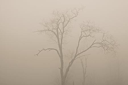 arbres, boira, boira, arbre, natura, bosc, branca