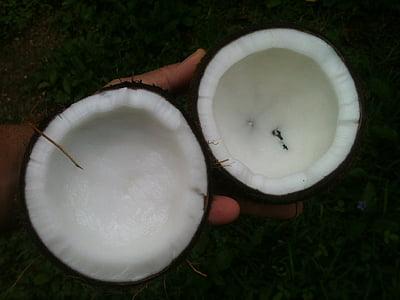 coco, oli, blanc, Palma, aromateràpia, coco, Orgànica