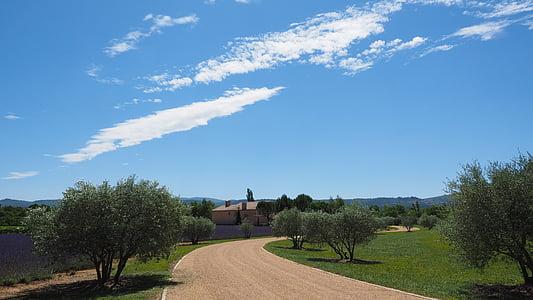 propietat, distància, oliveres, camp de lavanda, lavanda, camp, Provença