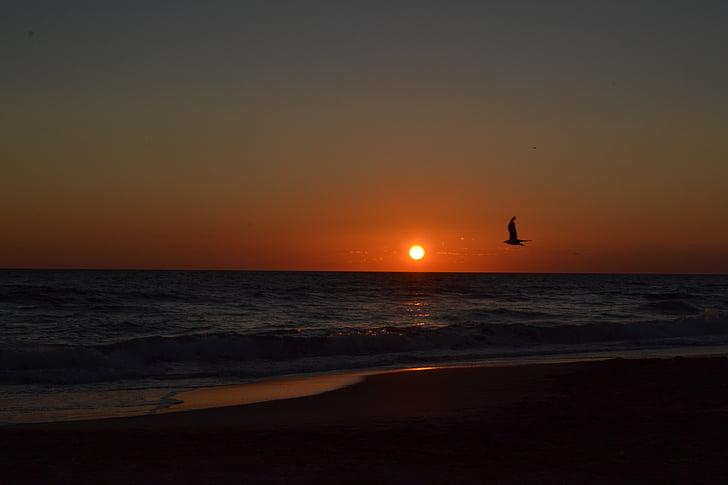 Deniz, martı, günbatımı