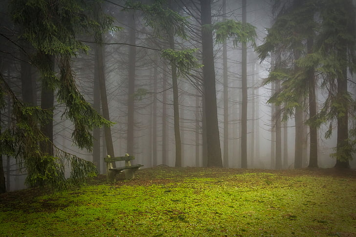 borovica, Forest, Pad, glade, Misty, Mystic, borovicový les