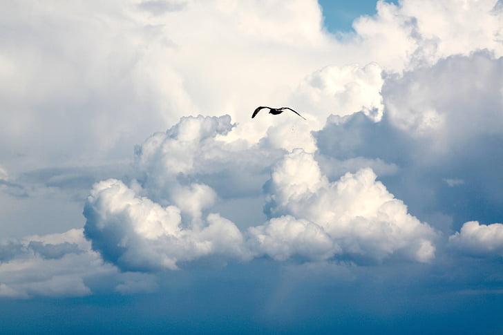 kuş, Uçuş, bulutlar, sinek, gökyüzü, Mavi gökyüzü bulutlar, Mavi gökyüzü