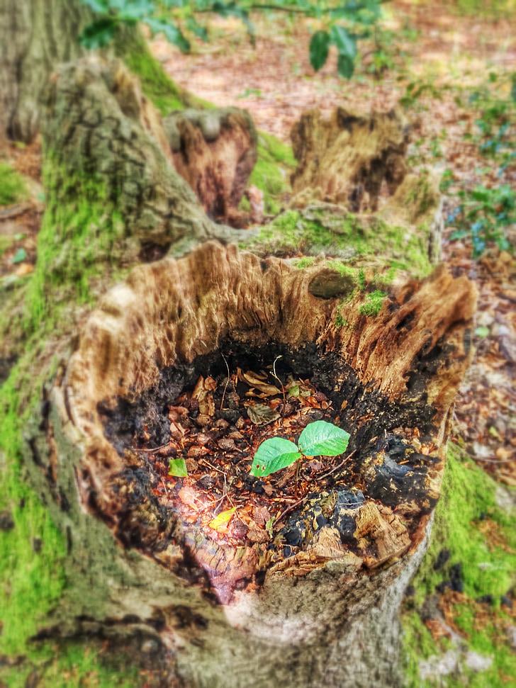 verd, tronc d'arbre, Scion, Alba, primavera, nou començament, viure