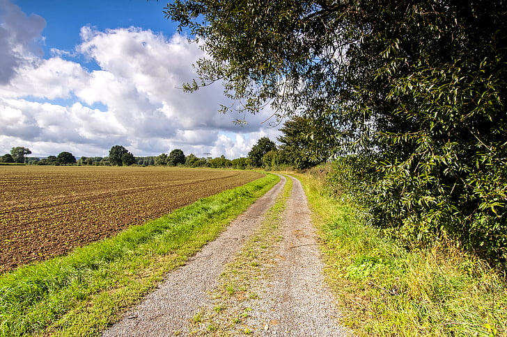 lane, away, nature, landscape