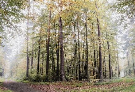 ліс, Пфальц, туман, ранок, Природа, настрій, краєвид