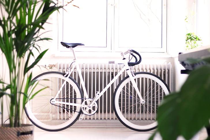 het platform, Indoor, interieur, groen, plant, fiets, fiets
