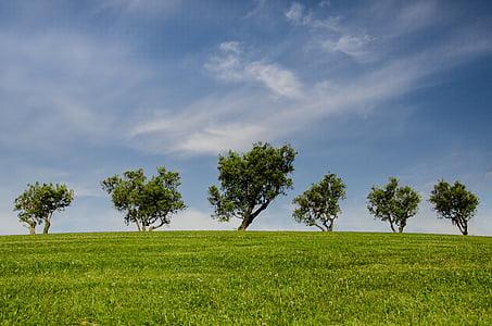 drzewa, wzgórze, zielony, niebieski, Natura, Park, Eco
