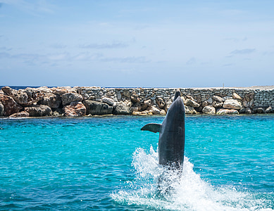 Delfini, akvarij, hoja, ribe, živali, Ocean, vode