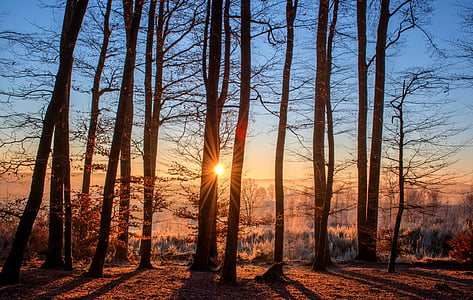 Forest, paysage, Dim, arbres, nature, bois, hiver