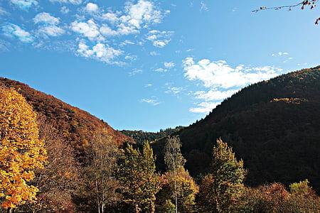 paysage, arbres, automne, humeur, feuilles d'automne, feuilles, vraies feuilles