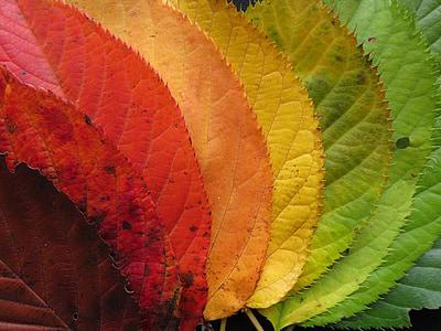 sonbahar yaprakları, sonbahar yaprakları, renkli, Sonbahar, Sonbahar, Renk, renkli