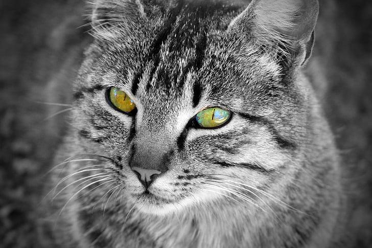 Besplatno krupne slike maca