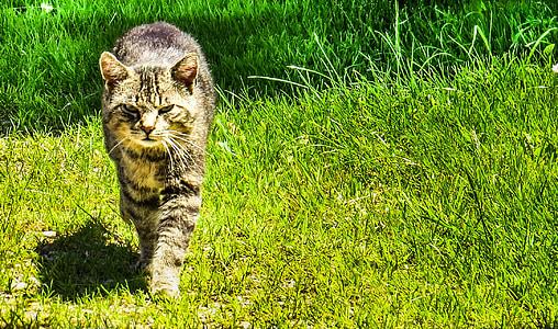 domestic cat, cat, animals