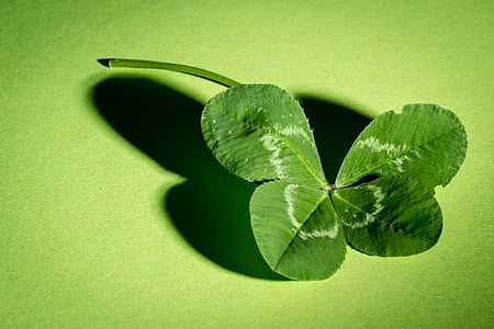 Klee, Four leaf apila, vihreä, vierblättrig, Leaf apila onnea, symboli, onnea