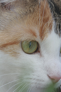 cat's eye, cat, animal, cat face, head, eye, face