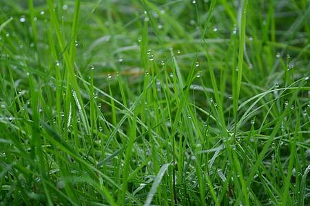gresset, grønn, dugg, dewdrops, morgen, grønt gress, eng