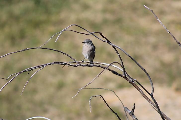 ocell, natura, Montana