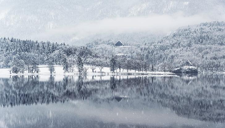안개, 숲, 호수, 조 경, 산, 눈, 눈이