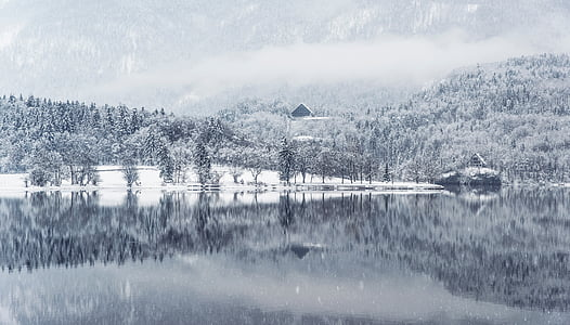 fog, forest, lake, landscape, mountain, snow, snowing