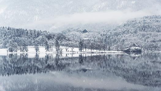 nebbia, foresta, Lago, paesaggio, montagna, neve, nevicata