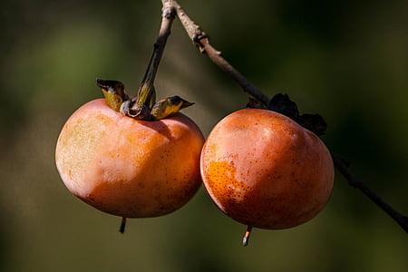 caqui salvatge, fruites de tardor, fruites de tardor, arbre de caqui, fruita taronja, baies de caqui, Diospyros virginiana