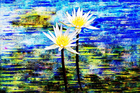 bunga, tanaman, Aster, alam, musim semi, Taman, musim panas