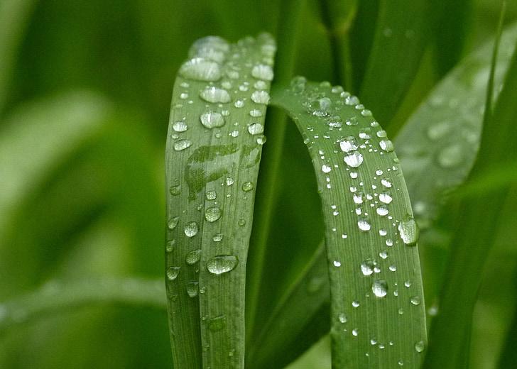 verd, herba, natura, jardí, gotes de pluja, close-up, gotes de pluja
